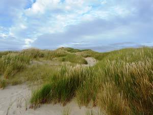 Massif dunaire du marquenterre