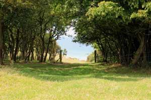 Bois de Rompval