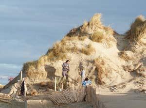 Fixation des dunes