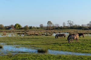 Marais de Larronville