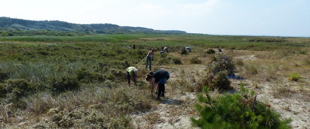 Cet été des bénévoles agissent pour la nature