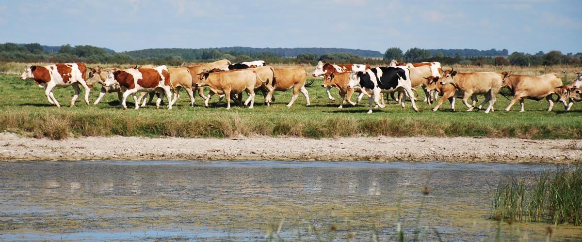 Un nouvel outil au service des éleveurs du Grand Site Baie de Somme