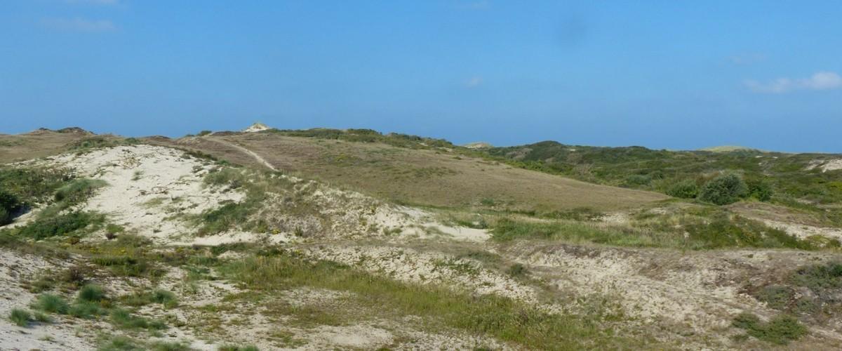 Restauration des paysages dunaires à Fort-Mahon