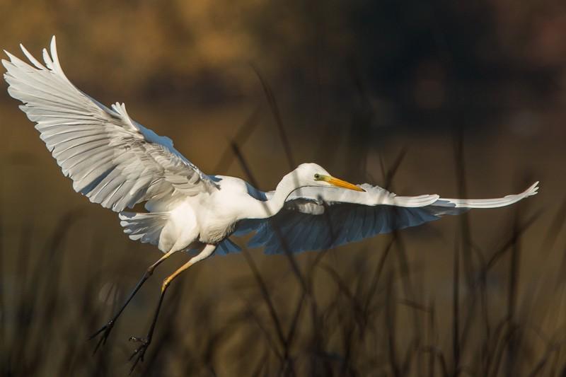 Découvrez un lieu remarquable : la Réserve Naturelle Régionale
