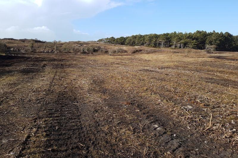Espace dunaire en cours de restauration