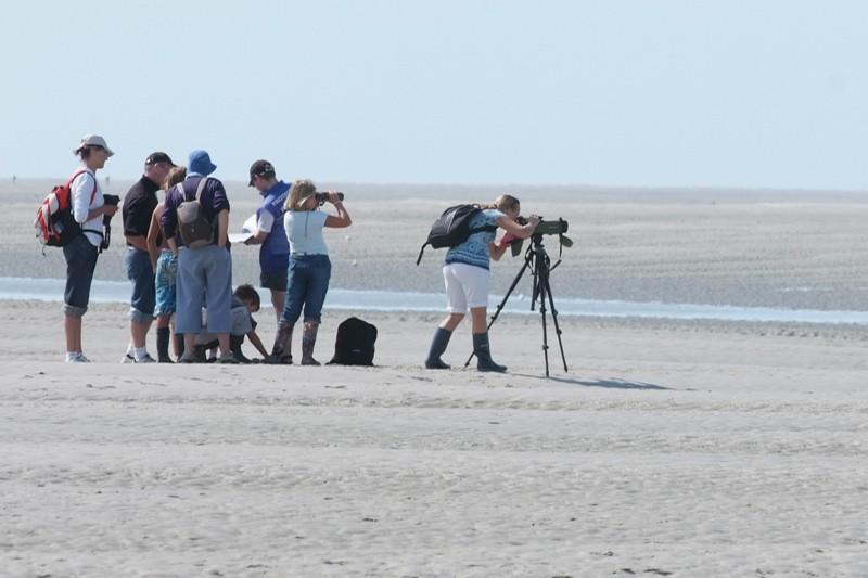 Observation de la colonie de phoques