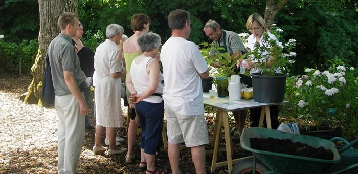 Visite guidées et atelier sur les Hortensias