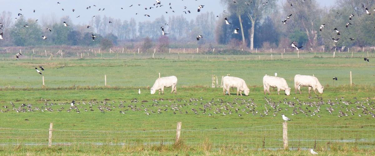 Biodiversité & élevage
