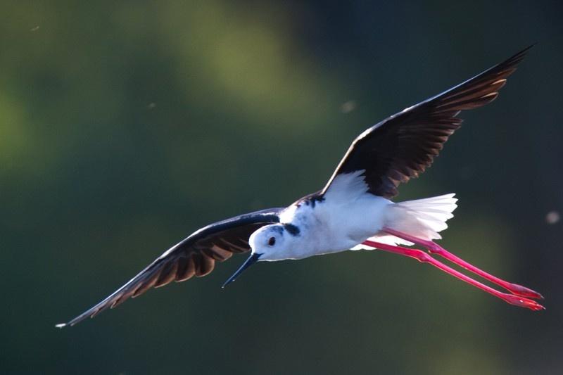 Le monde extraordinaire des oiseaux