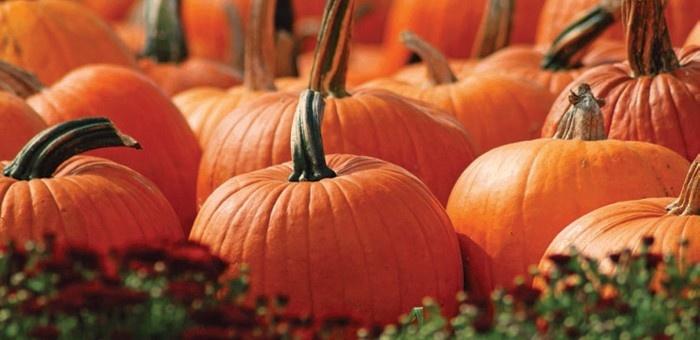 Fête de la citrouille et des saveurs d'automne