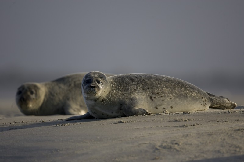 OBSERVING THE SEAL COLONY