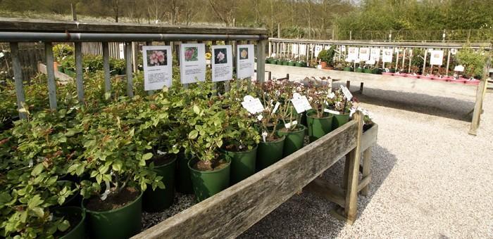 La jardinerie for Jardinerie des jardins