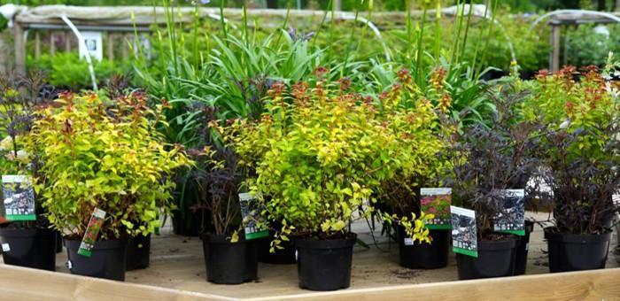 Jardins de valloires destination baie de somme for Jardinerie des jardins