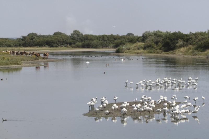 Halte migratoire au Parc du Marquenterre