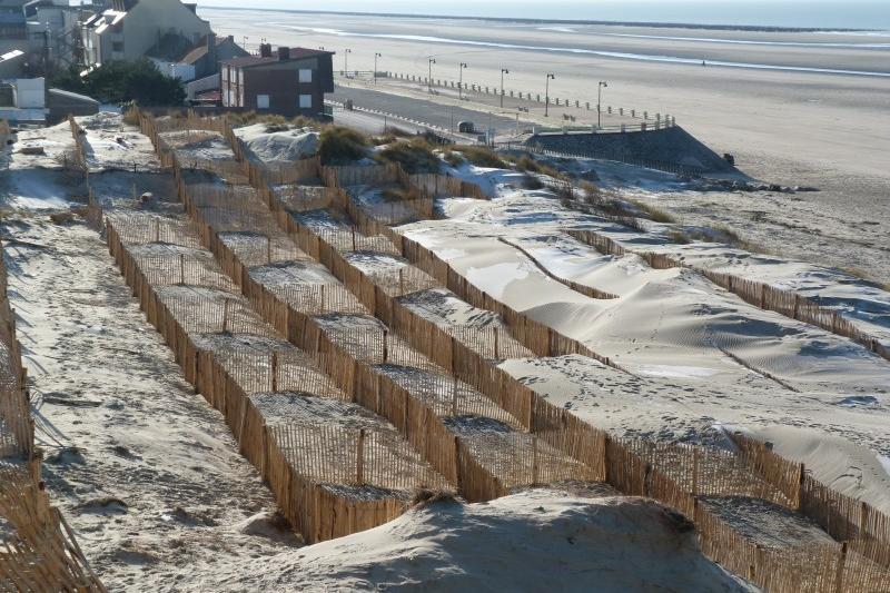 Plantation d'oyats et pose de ganivelles pour stabiliser le sable
