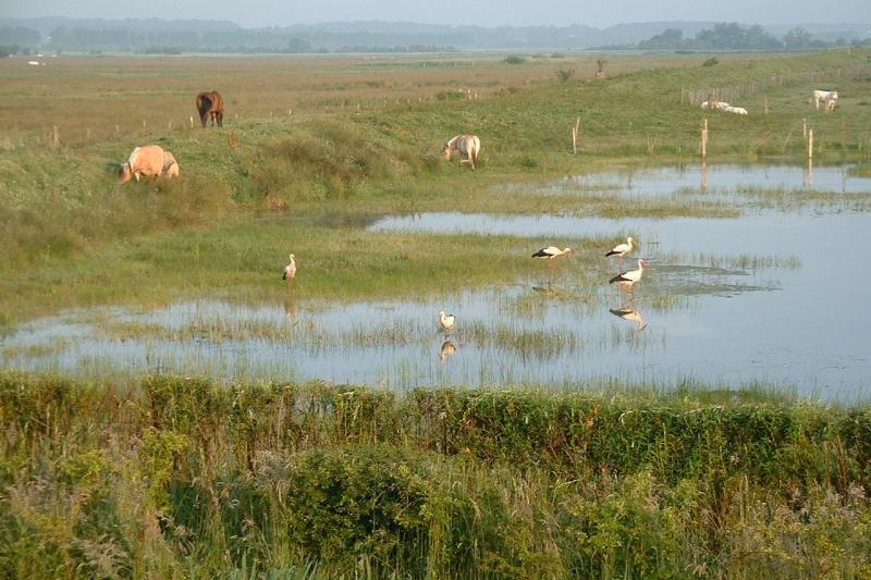 Les marais arrière-littoraux et leurs richesses écologiques