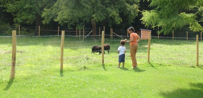 Rencontrer les nouveaux locataires des jardins les moutons d'Ouessant