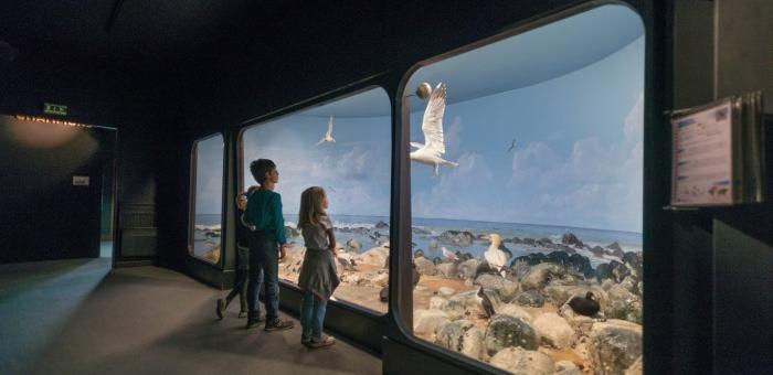 Observer les oiseaux dans une reproduction de leurs milieux naturels
