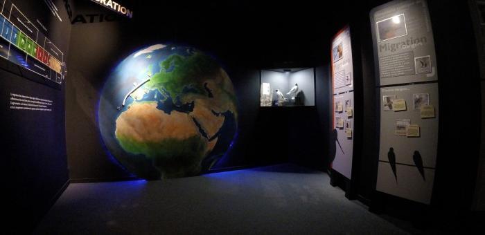Salle consacrée à la migration